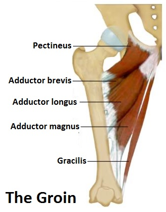 Hip Adductor Mojo