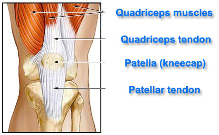 Understanding blake griffins partial quad tear in street clothes knee ccuart Images